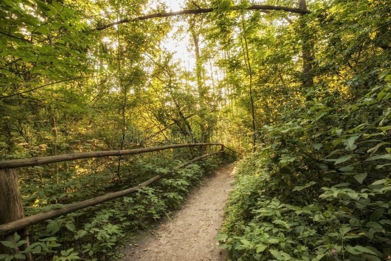Parque nacional de Roztocze Roztochia Trayectoria turística cerca de las cascadas en el río de Sopot fotografía de archivo libre de regalías