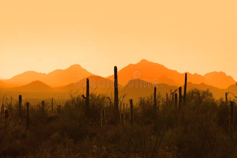 Parque nacional de Saguaro fotos de archivo