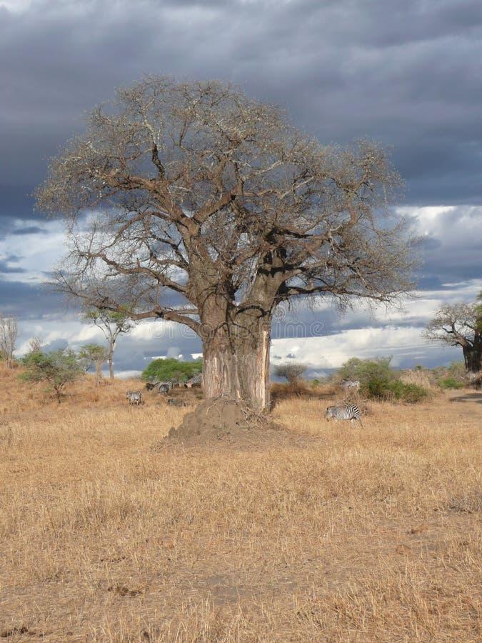Parque nacional de Serengeti imágenes de archivo libres de regalías