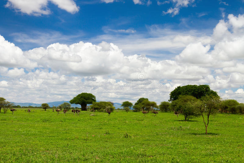 Parque nacional de Tarangire imagens de stock