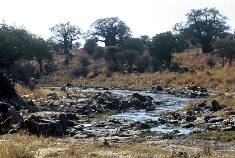 Parque nacional de Tarangire, Tanzânia imagem de stock