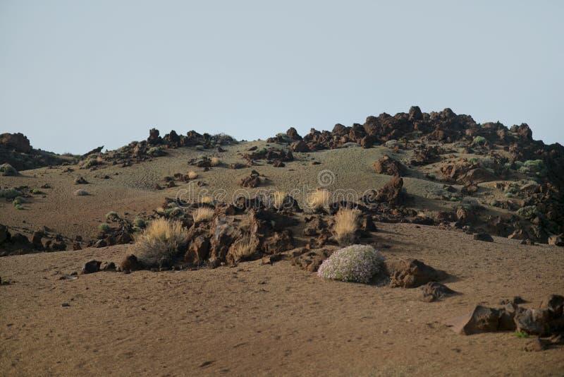 Parque nacional de Teide foto de archivo