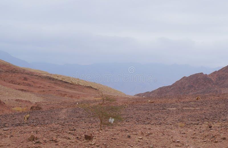 Parque nacional de Timna perto de Eilat fotografia de stock royalty free
