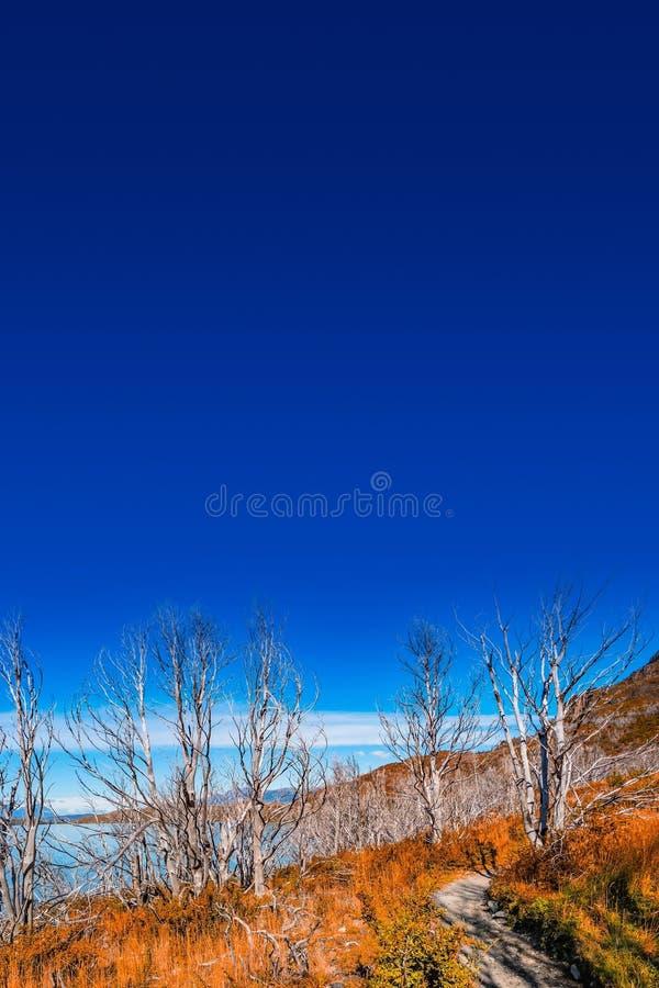 Parque nacional de Torres del Paine, suas florestas no outono dourado e céu azul, Patagonia, o Chile foto de stock royalty free