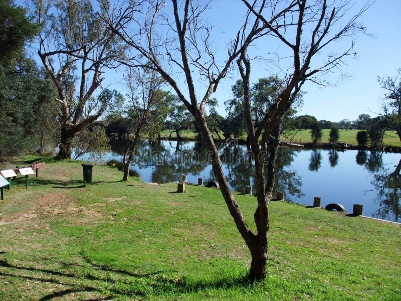 Parque nacional de Yanchep, Austrália Ocidental foto de stock royalty free