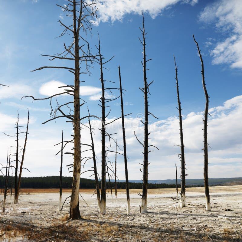 Parque nacional de Yellowstone. imagen de archivo libre de regalías