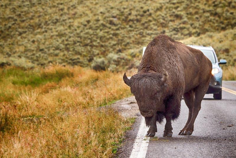 Parque nacional de Yellowstone foto de stock