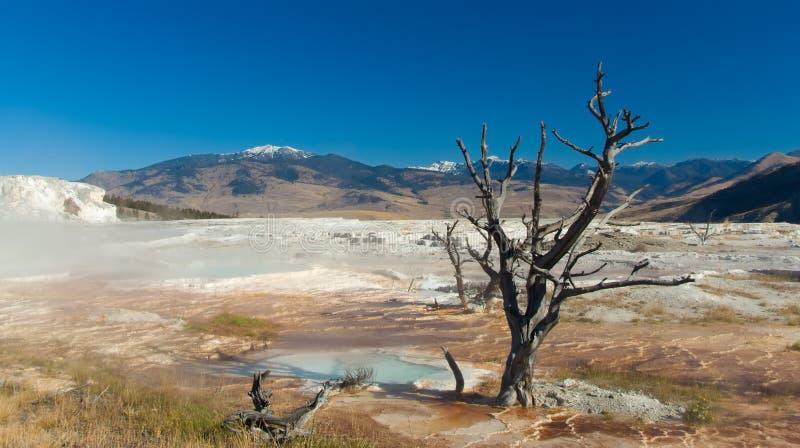 Parque nacional de Yellowstone: Mammoth Hot Springs imágenes de archivo libres de regalías