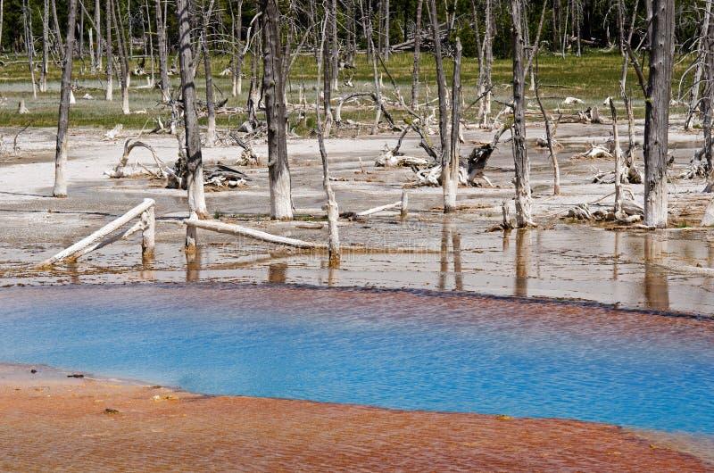Parque nacional de Yellowstone, Wyoming, EUA foto de stock