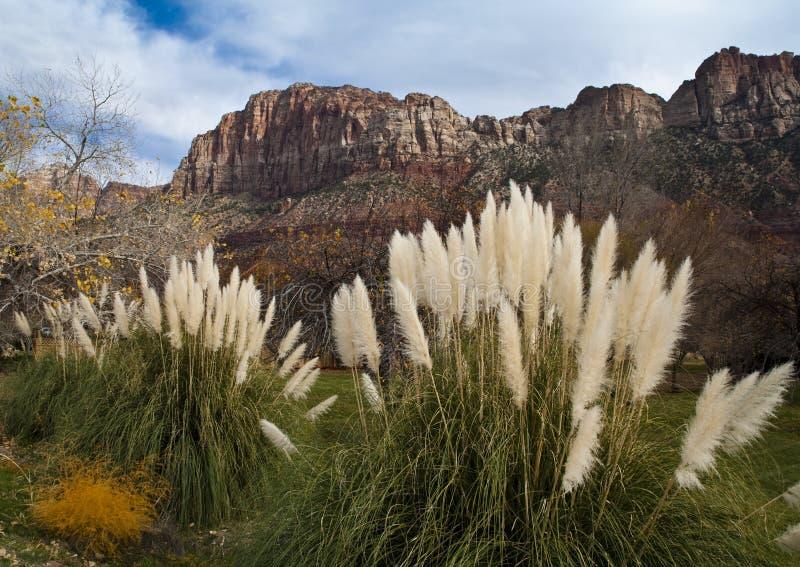 Parque nacional de Zion foto de archivo