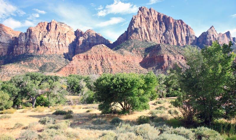 Download Parque Nacional De Zion Da Montagem Foto de Stock - Imagem de conifers, geological: 16865048