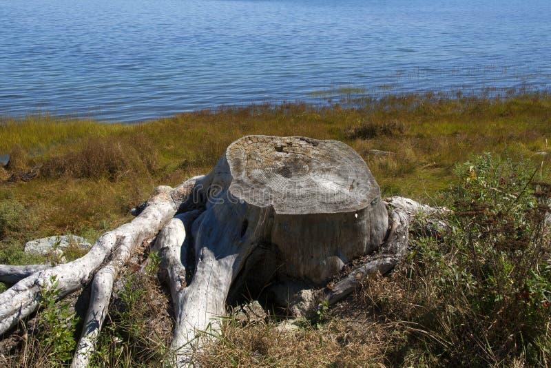 Parque nacional 302 del Acadia imagenes de archivo