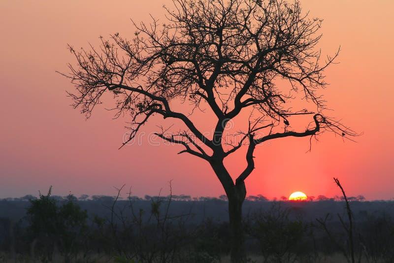 Parque nacional del kruger de la puesta del sol fotografía de archivo libre de regalías