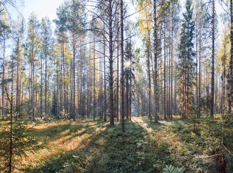 Parque nacional del norte ruso foto de archivo libre de regalías