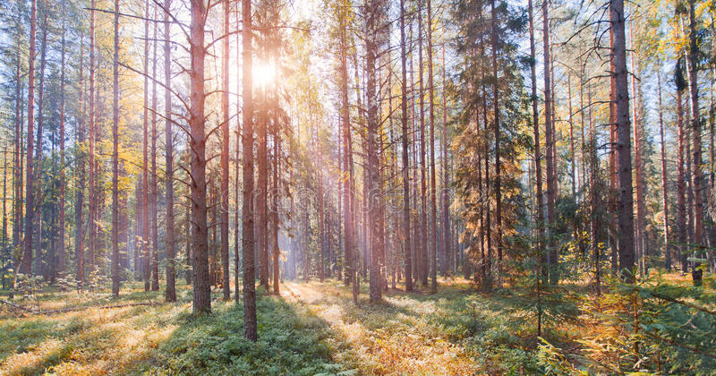 Parque nacional del norte ruso fotos de archivo libres de regalías