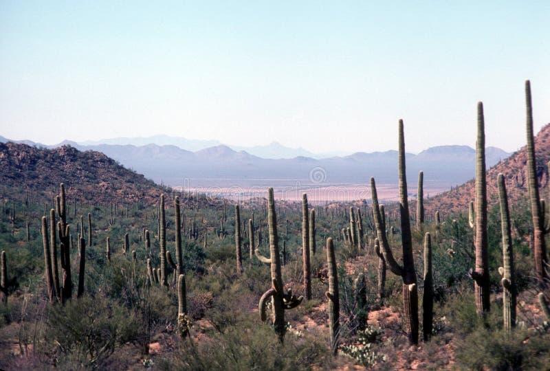 Parque nacional del Saguaro fotos de archivo