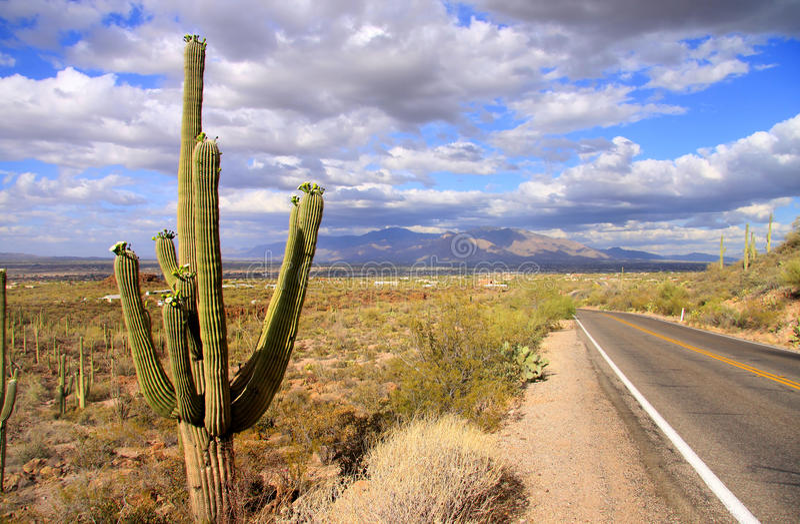 Parque nacional del Saguaro fotos de archivo libres de regalías