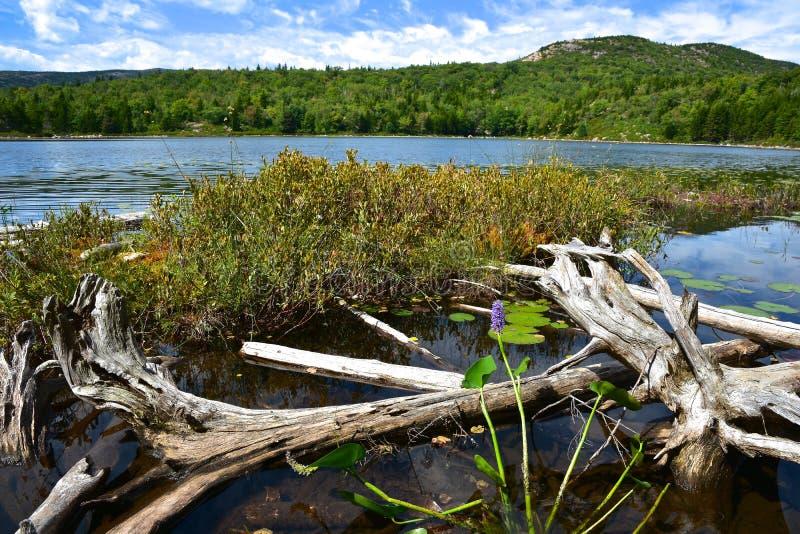 Parque nacional do Acadia fotos de stock royalty free