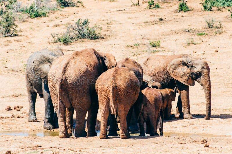 Parque nacional do elefante de Addo, cabo oriental, África do Sul foto de stock