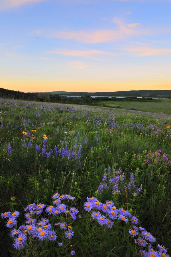 Parque nacional do lago Waterton imagens de stock royalty free