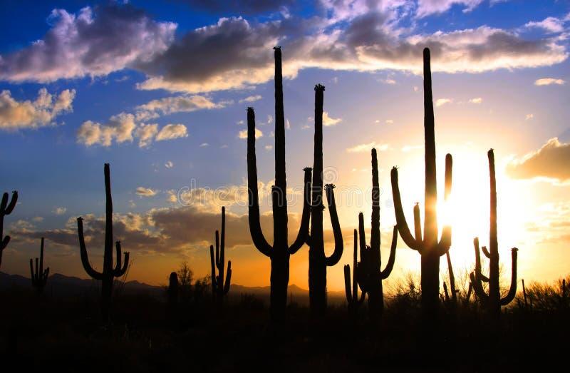 Parque nacional do Saguaro fotos de stock royalty free