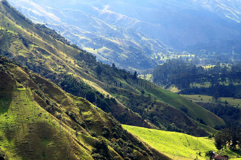 Parque nacional do vale de Cocora fotografia de stock