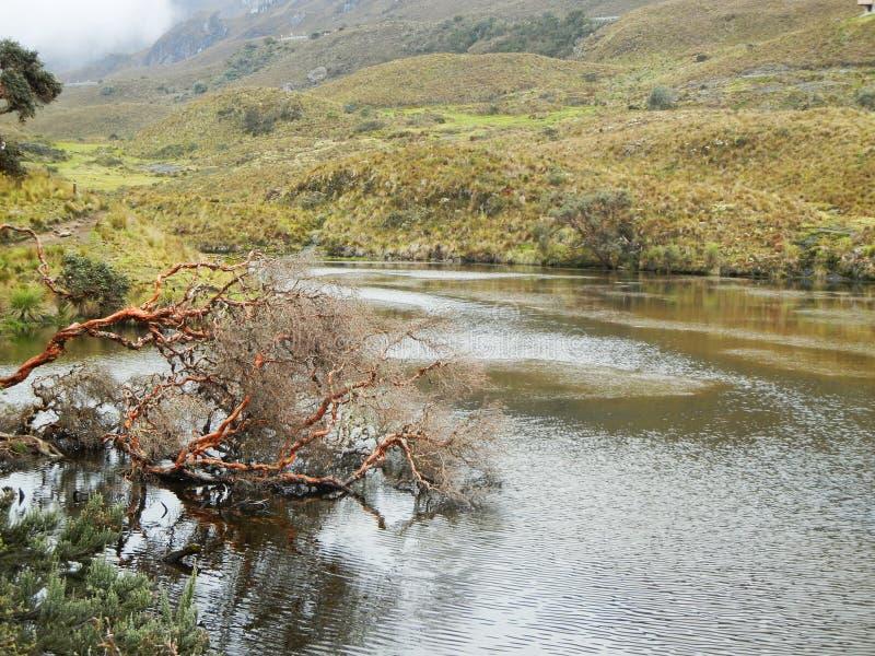 Parque nacional dos cajas do EL Cuenca, Equador fotos de stock