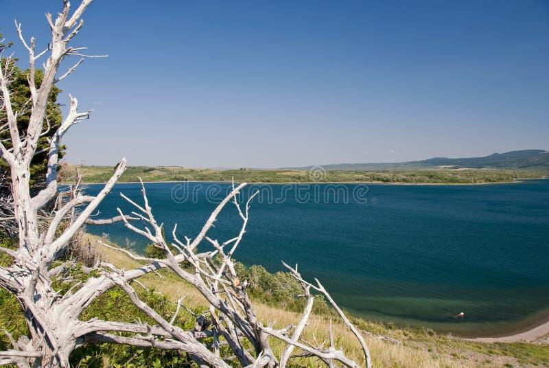 Parque nacional dos lagos Waterton fotografia de stock royalty free