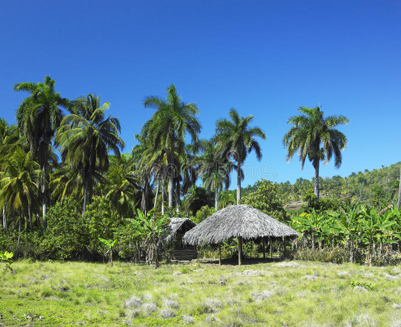 Parque nacional em Cuba fotos de stock royalty free