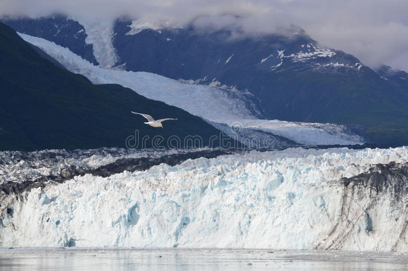 Parque Nacional Glacier - Alaska fotografía de archivo
