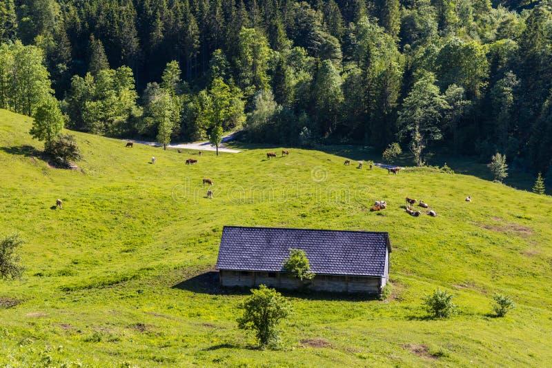 Parque nacional Kalkalpen em Áustria imagens de stock royalty free