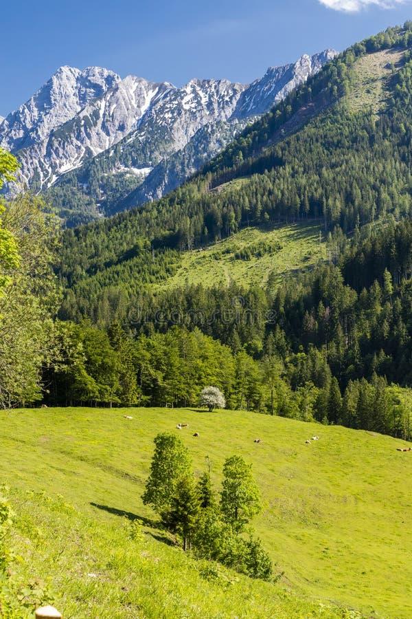 Parque nacional Kalkalpen em Áustria fotos de stock royalty free