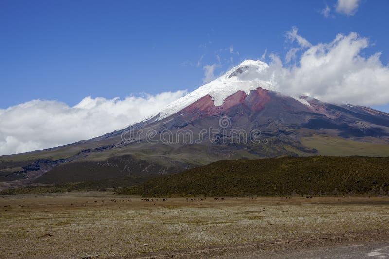 Parque Nacional le Cotopaxi, volcan photographie stock libre de droits