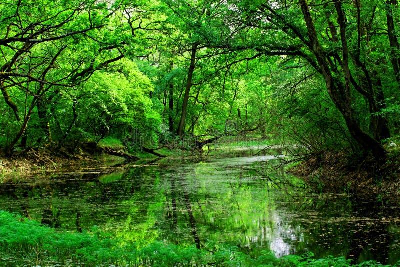 Parque nacional Lunca Muresului fotografía de archivo