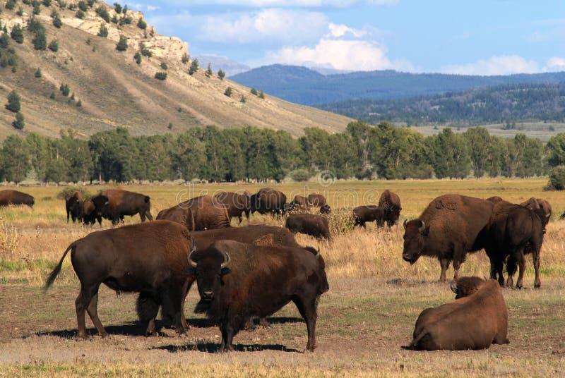 Parque nacional magnífico de Teton, Wyoming, los E.E.U.U. fotografía de archivo libre de regalías