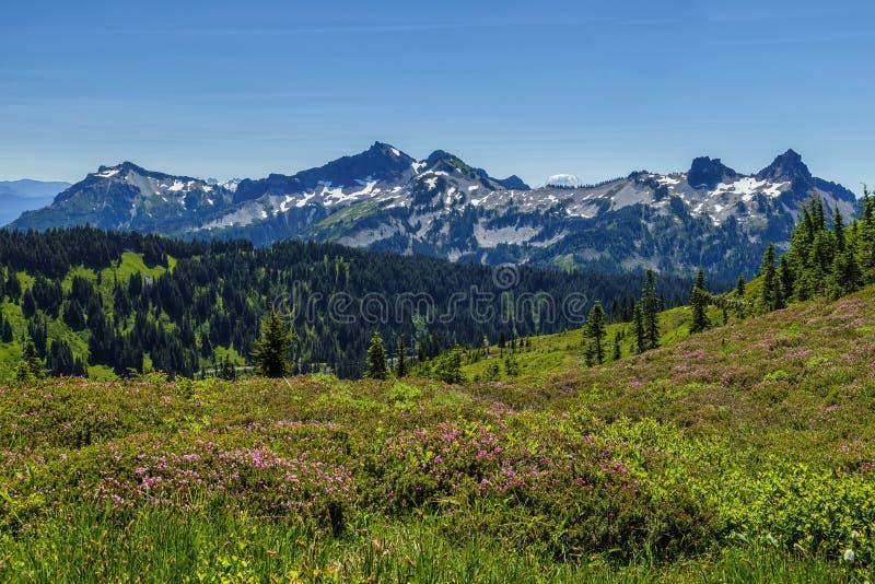 Parque nacional mais chuvoso da montagem, Washington imagem de stock