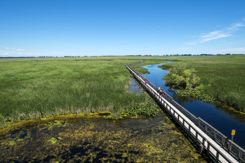Parque nacional Marsh Boardwalk #1 de Pelee del punto imágenes de archivo libres de regalías