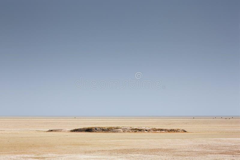 Parque nacional Namibia, África, varón y avestruz femenina ru de Etosha fotografía de archivo