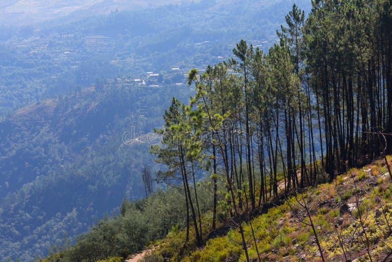 Parque nacional Portugal de los geres de Peneda fotos de archivo libres de regalías
