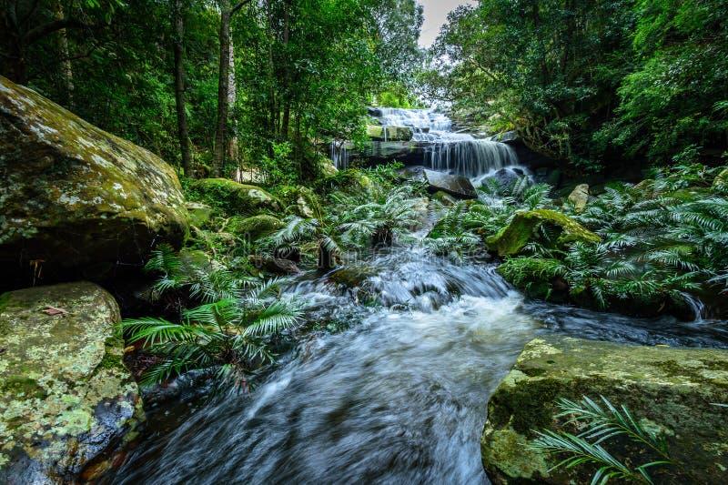 Parque nacional profundo de Phu Kradueng de la cascada del bosque, Tailandia imagen de archivo libre de regalías