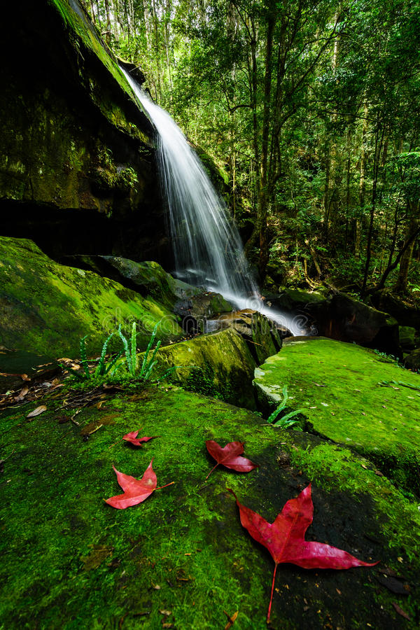 Parque nacional profundo de Phu Kradueng de la cascada del bosque, Tailandia imagenes de archivo