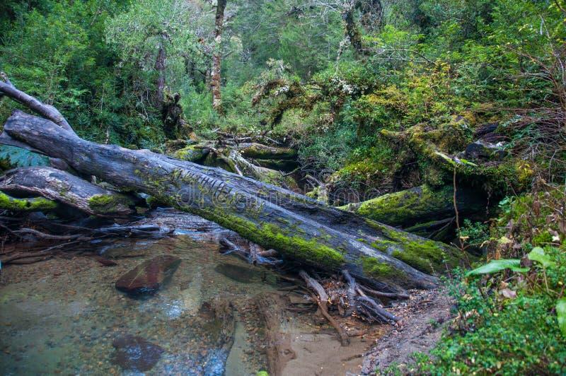 Parque Nacional von Queulat, Carretera Austral, Landstraße 7, Chile lizenzfreie stockfotos