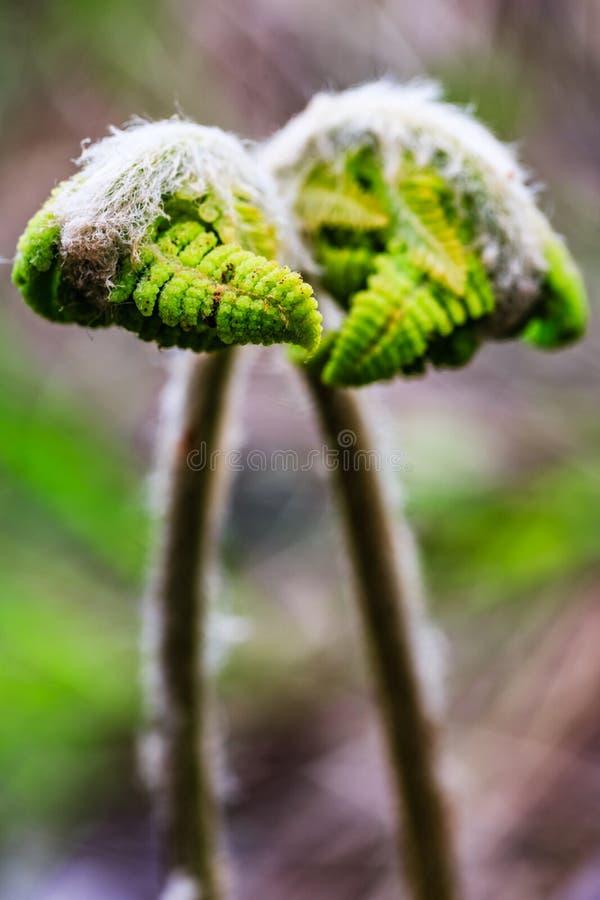Parque natural da angra do moinho, maior Moncton, Novo Brunswick, Canad? fotografia de stock