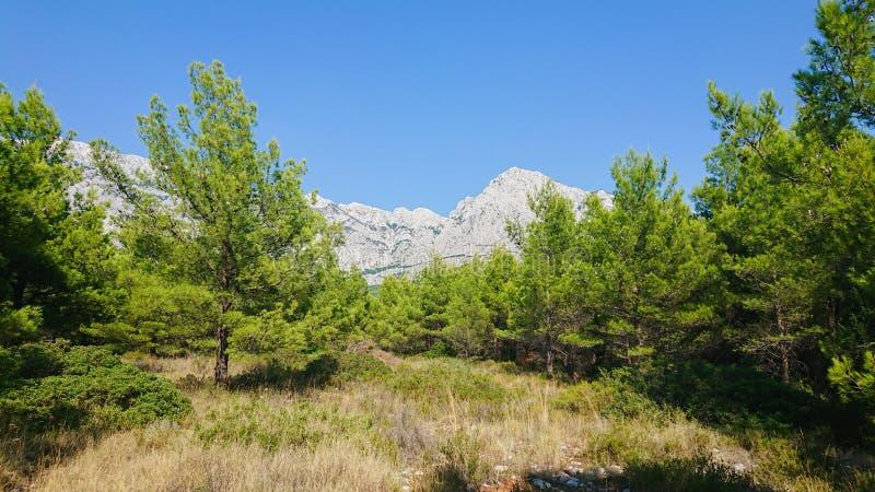 Parque natural de la montaña Biokovo y árboles de la Riviera de Makarska, Dalmatia fotografía de archivo