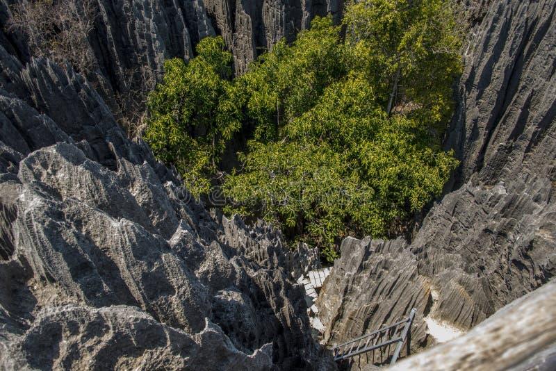 Parque natural de Tsingy de Bemaraha imagem de stock royalty free