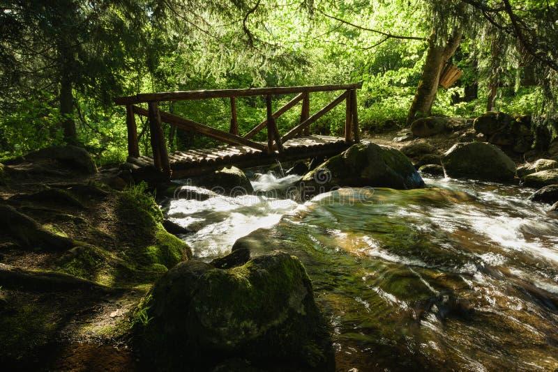 Parque natural de Vitosha perto de Sófia, Bulgária A área dourada das pontes Paisagem do córrego da água imagem de stock royalty free
