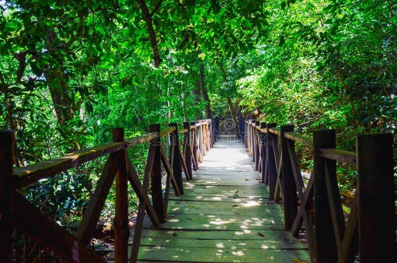 Parque natural do EL Chiflon, Chiapas, México 25 de maio imagens de stock