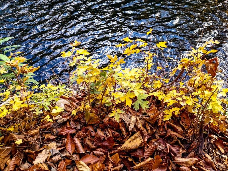 Parque natural Grza perto do Paracin, Sérvia fotografia de stock