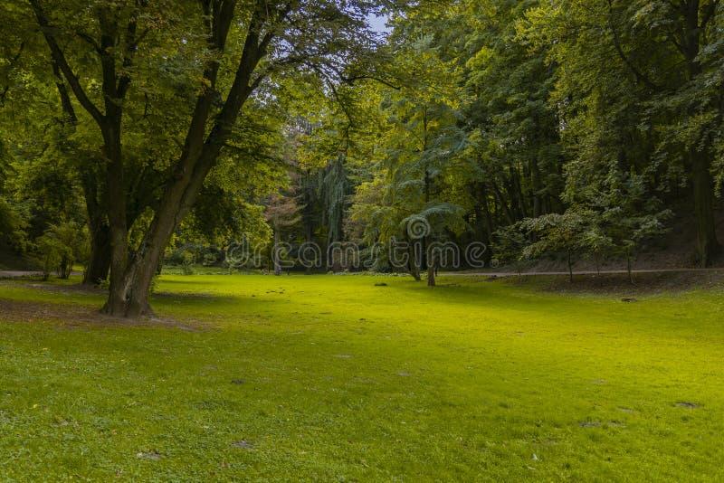 Parque natural tranquilo em Idyllic Outdoor Cena de primavera Ambiente de erva verde Superfície de chão liso cercado por árvores  imagens de stock royalty free