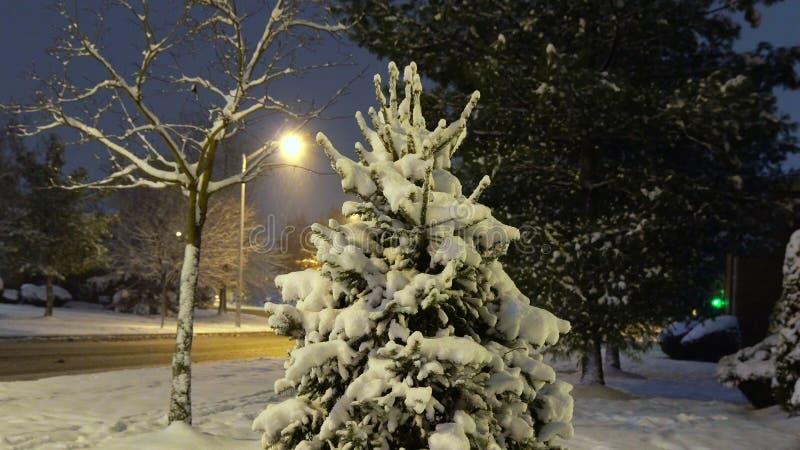 Parque nevado da cidade à luz das lanternas na noite Árvores cobertos de neve e bancos, passeio em um parque fabuloso da noite do fotografia de stock royalty free